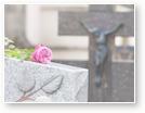 Allerheiligen, Allerseelen, Beerdigung - rosa Rose