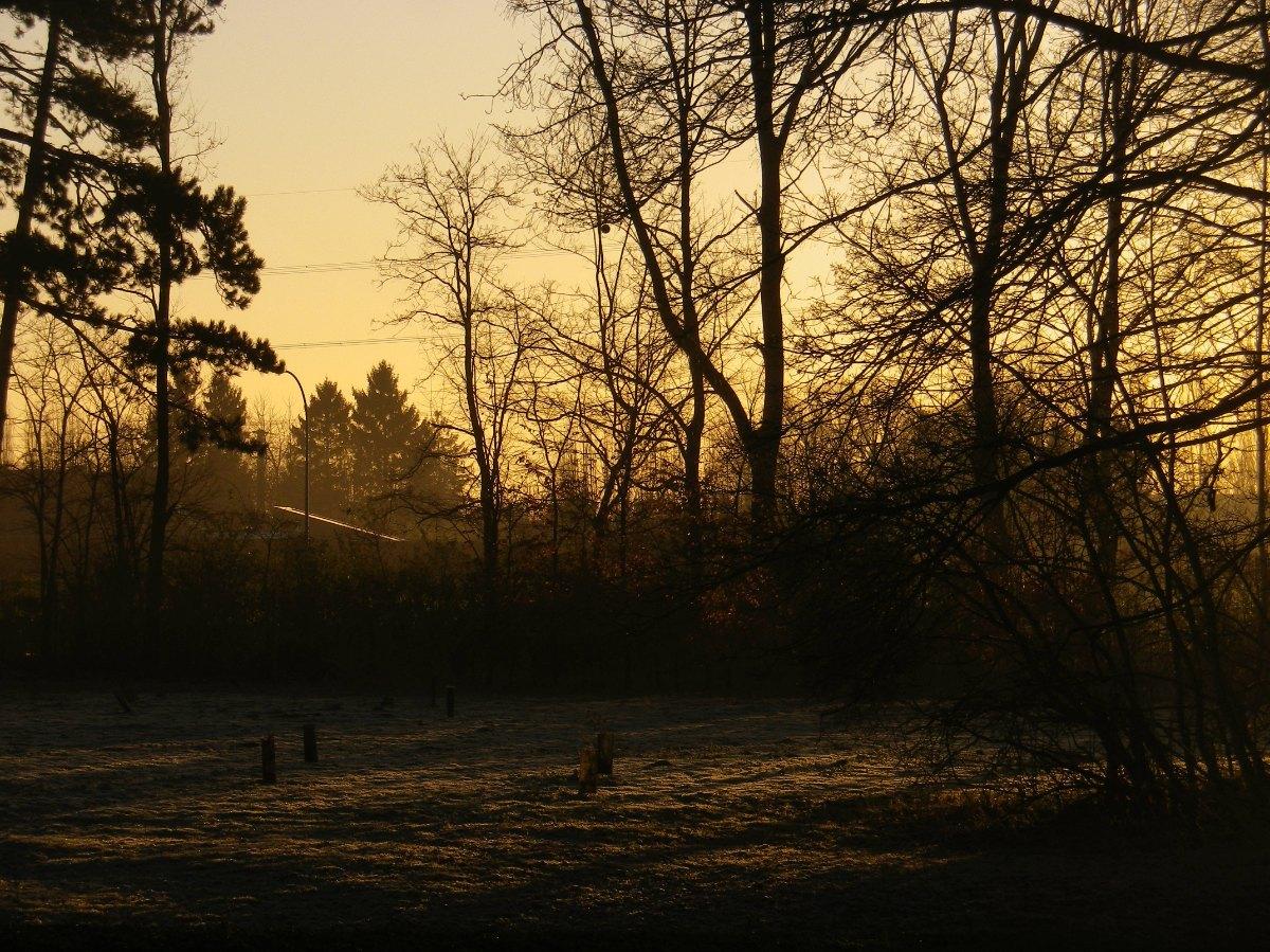 025- Lumieres du matin...
