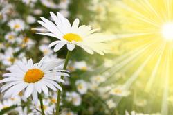 Fleurs et soleil