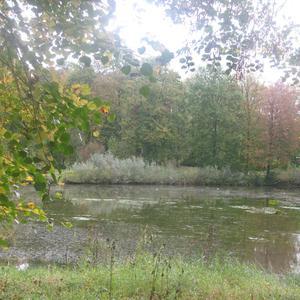 Forêt de Bonsecours