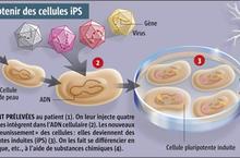 cellules iPS - 2