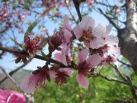 Fleurs_Coree_1