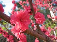 Fleurs_Coree_2
