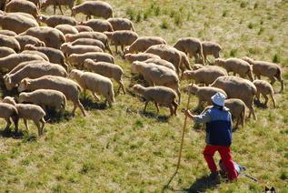 Bergère et son troupeau 1