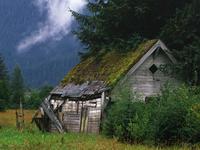 Cabane dans un champ