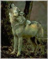 Loup-une