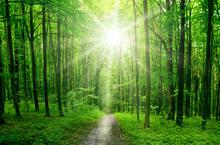 chemin vers pâques