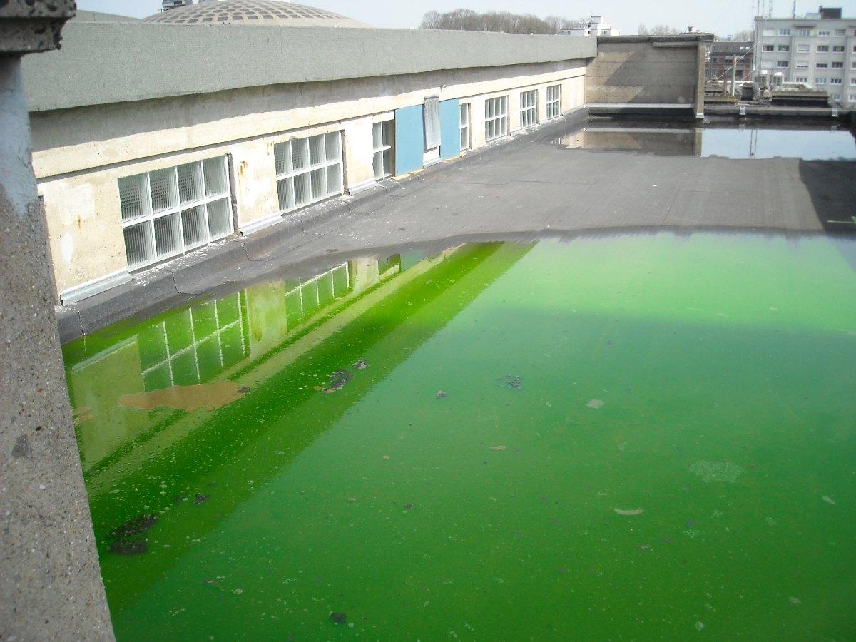 Mise en eau du toit avec du colorant pour détecter l'origine des fuites.