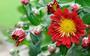 Fleurs Toussaint 2