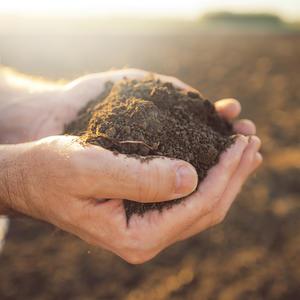 Handful of arable soil in hands of responsible far