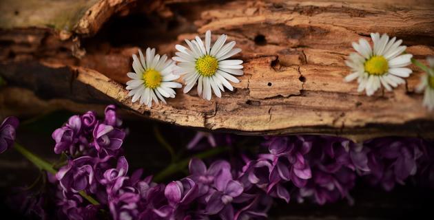 wood-1406895