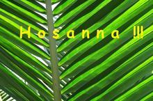 palmes - Copie