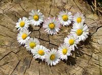 coeur_fleur