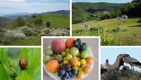 biodiversité partout