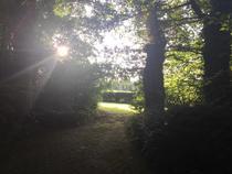 arbre soleil chemin - Christine Gambier
