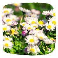nature printemps fleur