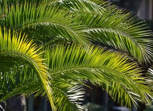 palm - Gini George de Pixabay