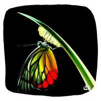 papillon_scaphandre