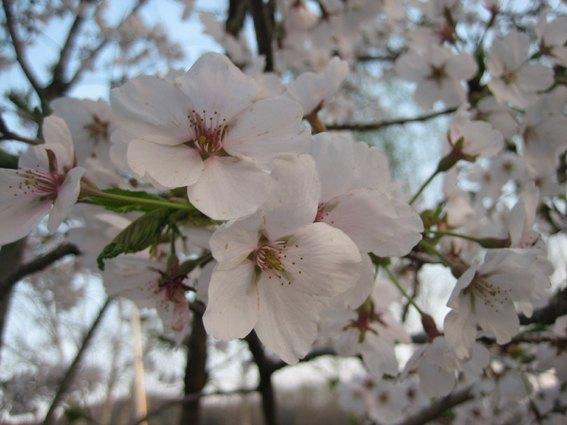 fleurs paques.jpg