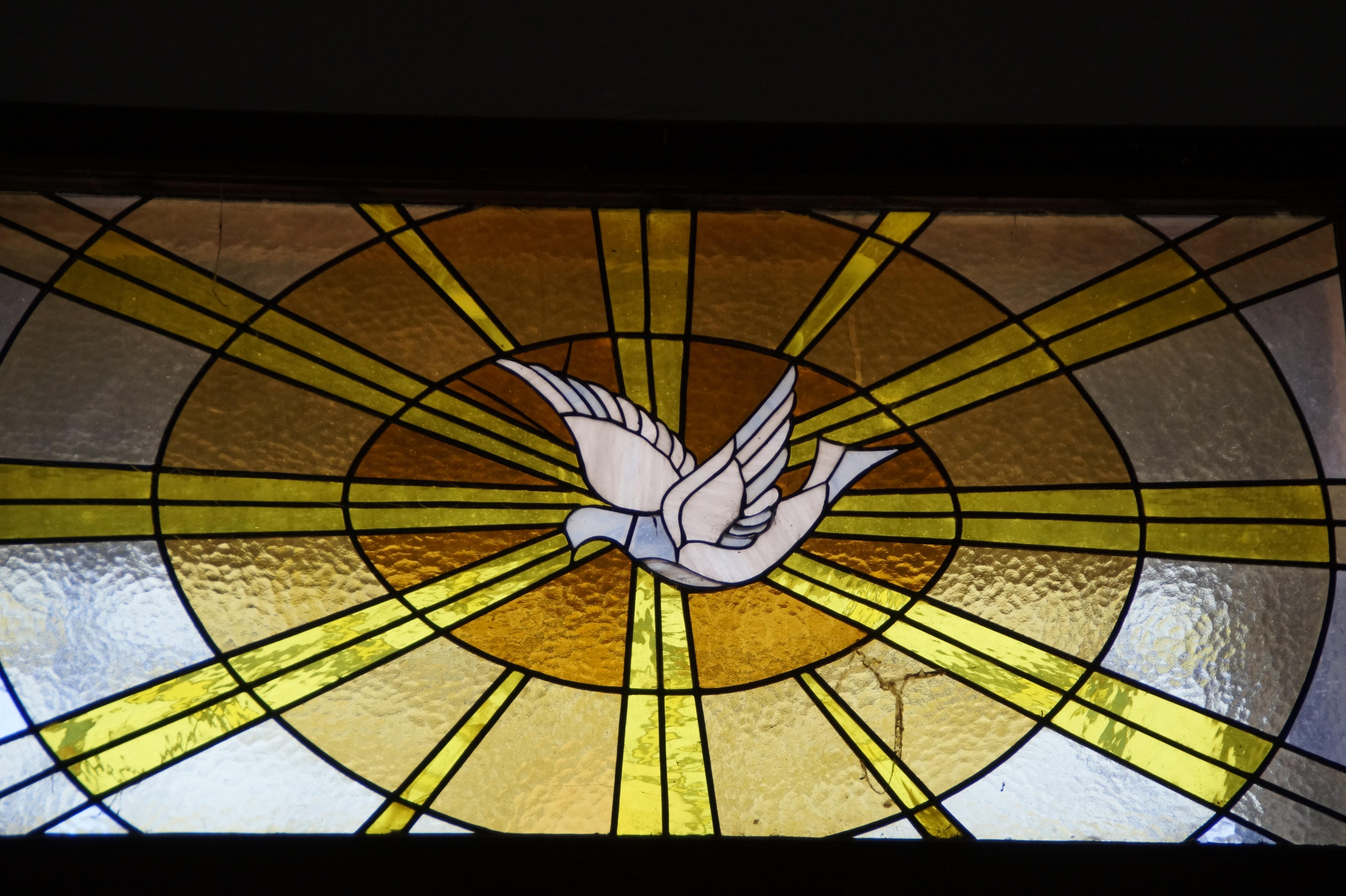 holy spirit, dove, window