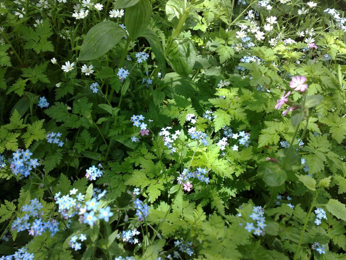HON (15) fleurs sauvages