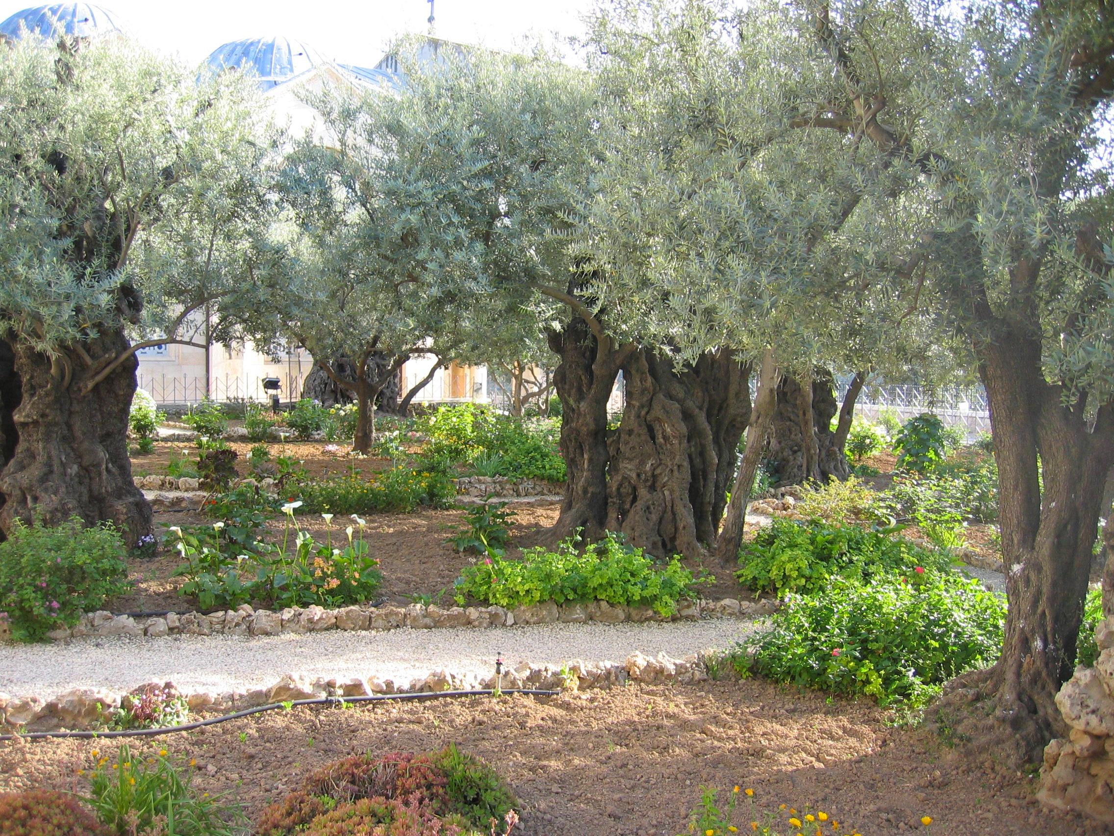Jerusalem Mt des Oliviers Gethsemani