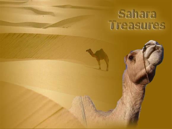 Les trésors du désert