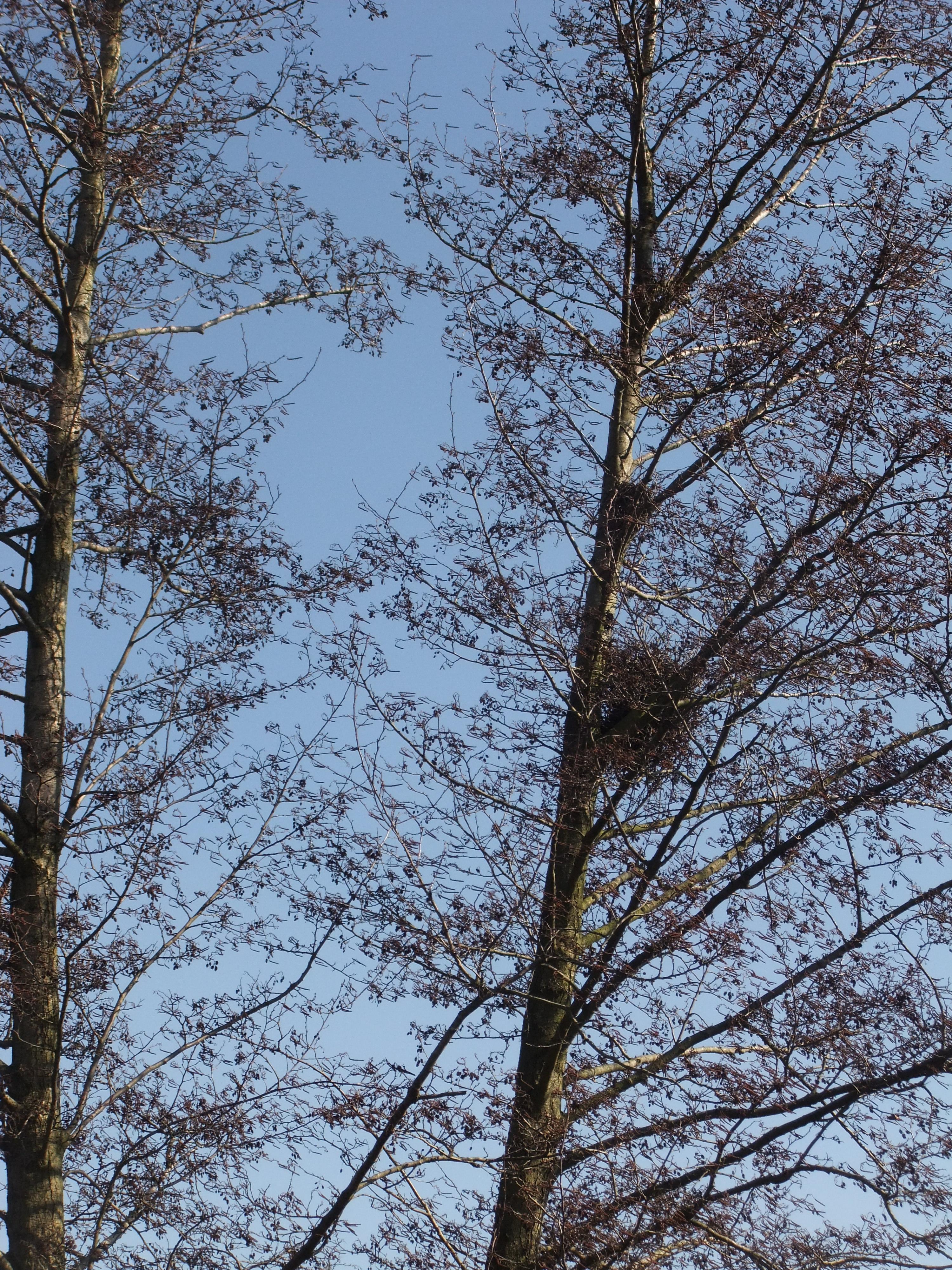 Un nid, attend le printemps, surtout qu'aujourd'hui le soleil est là...