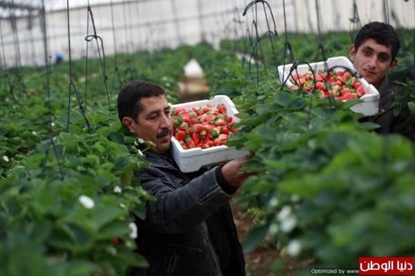 des produits agricoles de qualité + un réseau de distribution à domicile + un contrat de fidélité entre producteurs et consommateurs...